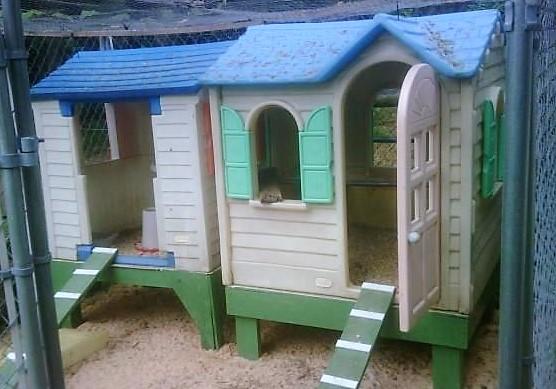 Des poulaillers faits avec des maisons