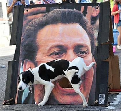 Photos drôles et insolites de chiens