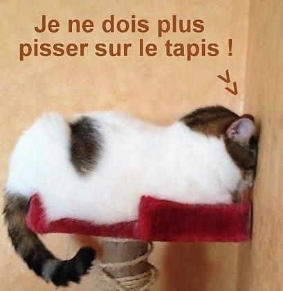 Chats fâchés qui boudent