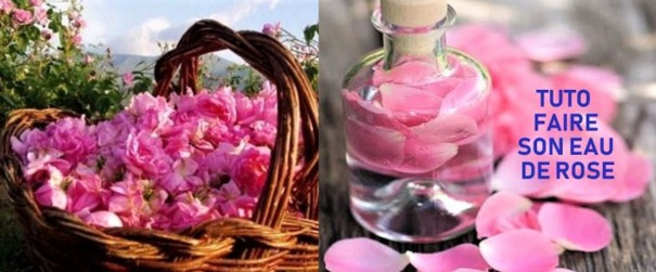 Tutoriel faire son eau de rose naturelle