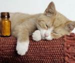 La ronron thérapie : ces chats qui nous guérissent !