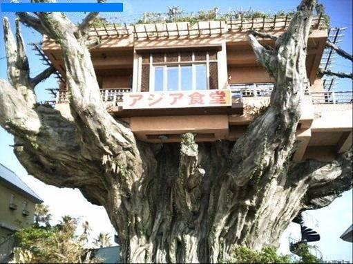 ça, c'est la maison de Robinson Crusoé, non ?