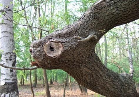 tableau vivant : l'arbre à chèvres...
