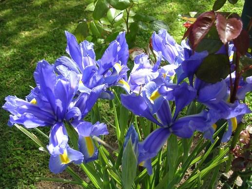 Des fleurs et encore des fleurs !