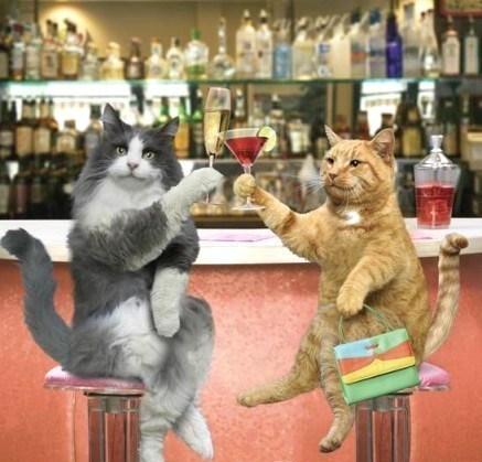 Quand les maîtres sont absents, les chats trinquent à leur santé..