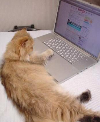 J'ai besoin de l'ordi, faut que je réponde à tous mes mails !