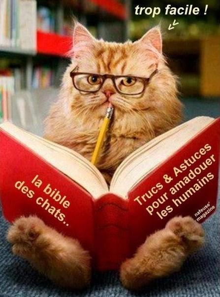 Photos humour : les chats font la loi !