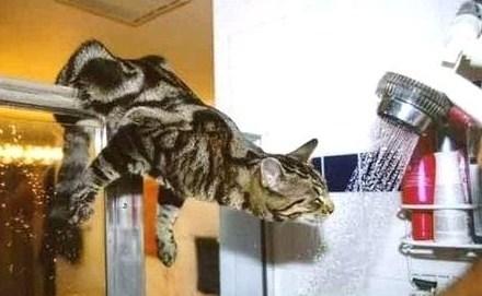 J'suis un vrai acrobate moi, quand j'ai soif, j'me débrouille !