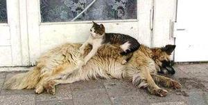 J'aime pas me salir, j'ai trouvé un tapis chauffant !
