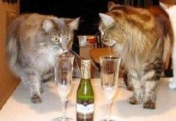 Une belle vie de chat, ça s'arrose !