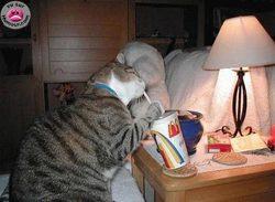 Pas mauvais, ce lait-fraise !