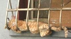 Une p'tite sieste, peinard..au frais !