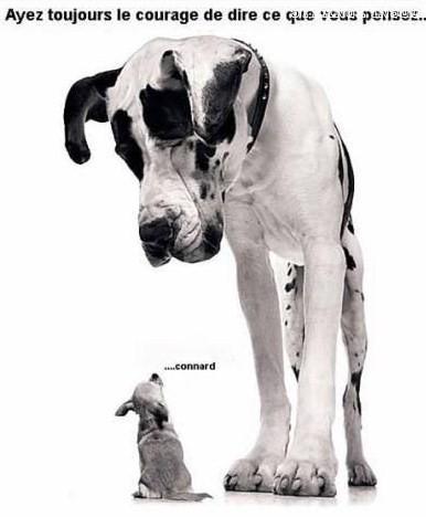 Dessins humoristiques de nos amis les bêtes !