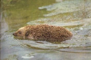 et en plus il sait nager, boulle de pics..