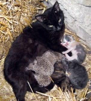 peut même se faire adopter par maman chat..
