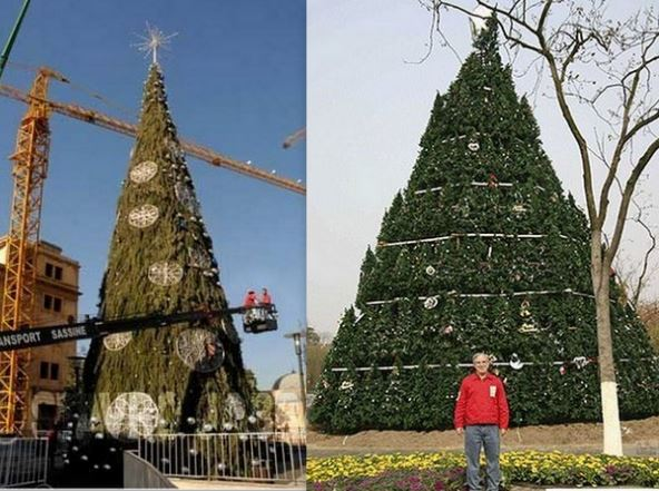 Sapins Noël géants..