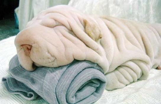 C'est quoi ça ? Ils ont sorti des nouvelles serviettes éponges ?