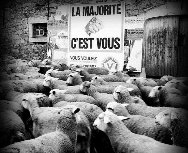 Nous sommes tous des moutons..