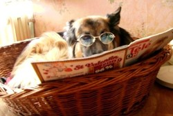 Insolite : les chiens portables !