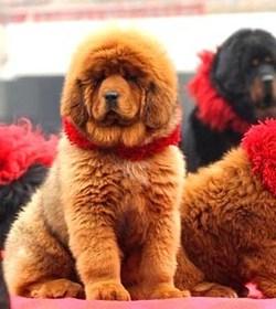 Le chien et le chat les plus chers du monde !