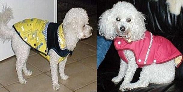 Confectionner un manteau pour un petit chien !