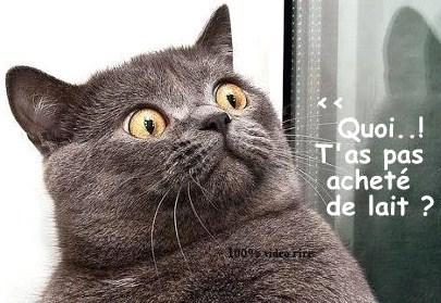 Dessins humoristiques \u0026quot;les chats\u0026quot;.