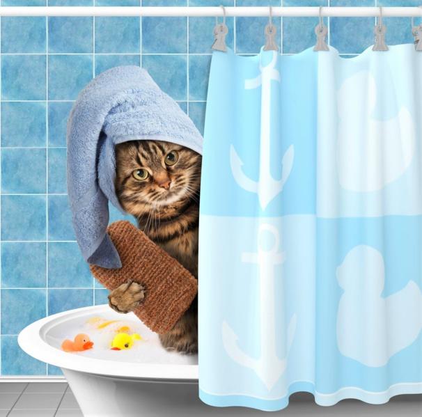 Comment laver un chat ?