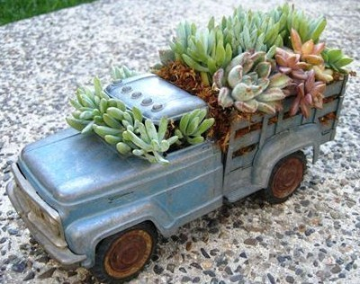Les plantes grasses à roulettes !