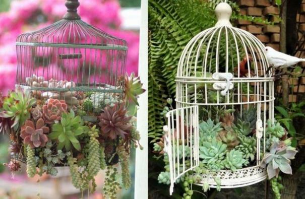 Les plantes succulentes subliment le jardin page 2 for Decorer une cage a oiseaux