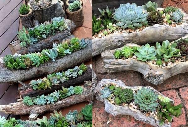 cascade de succulentes..