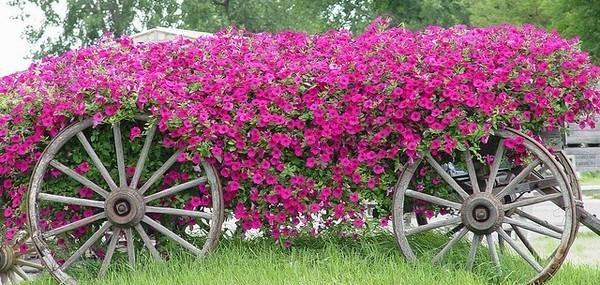 Les vieilles charrettes d\'antan fleurissent le jardin !