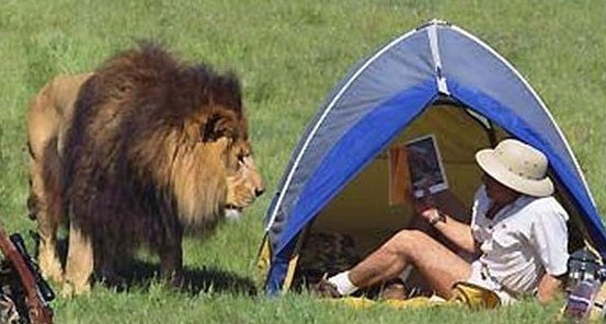 """t'aurai pas vu Tarzan, j'ai 2 mots à lui dire"""