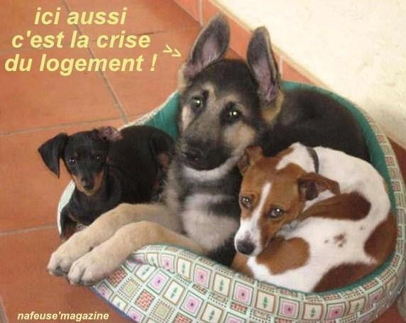 Photos animaux drôles avec légendes humoristiques