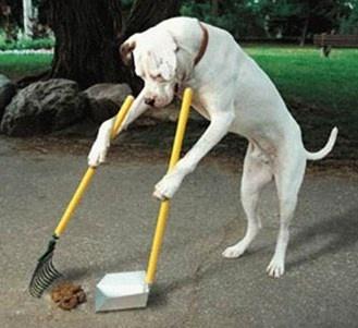 4 vidéos de chiens intelligents et surdoués