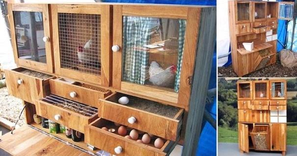Avoir des poules dans son jardin