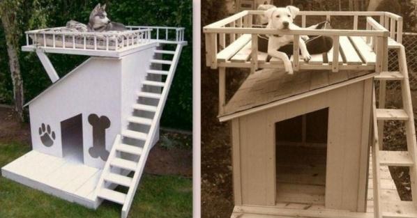 Des niches pour chien originales et insolites for Niche exterieur