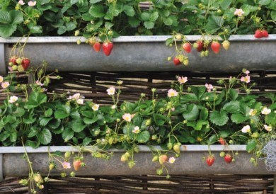 Recyclez vos gouttières en zinc en jardinières !