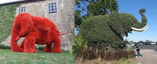 Superbes Sculptures végétales éléphants