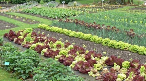 Au printemps c 39 est le renouveau au jardin for Jardin synonyme