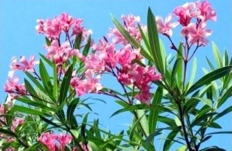 Au printemps, c'est le renouveau au jardin !