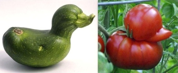 courgette et tomate coin coin !