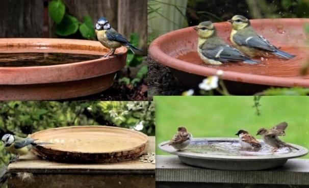 Modèles et idées pour faire un abreuvoir pour oiseaux
