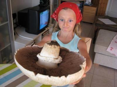 Cueillette miraculeuse de champignons géants !