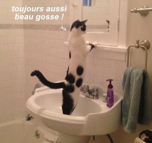 9 photos drôles et amusantes animaux
