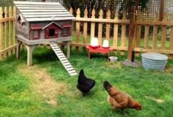 Conservation des oeufs conseils pratiques - Conservation des oeufs de poule ...