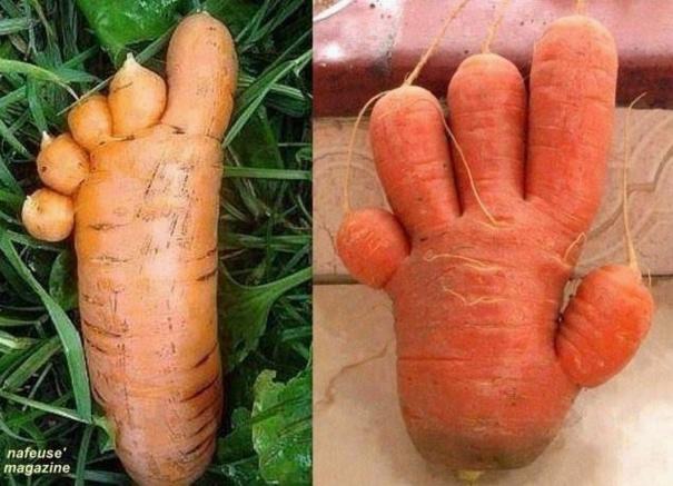 des carottes qui ont la main verte...!