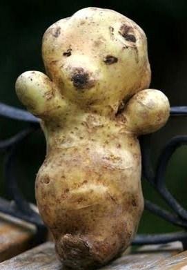 la patate nounours..