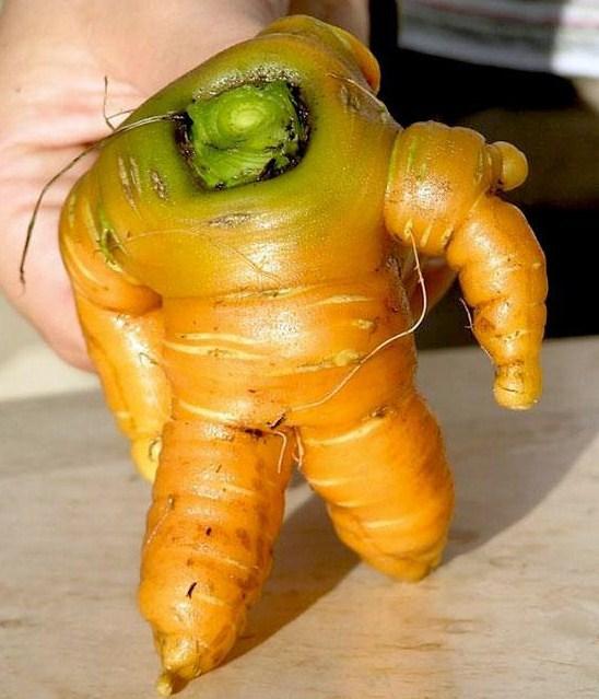 la carotte astronaute..