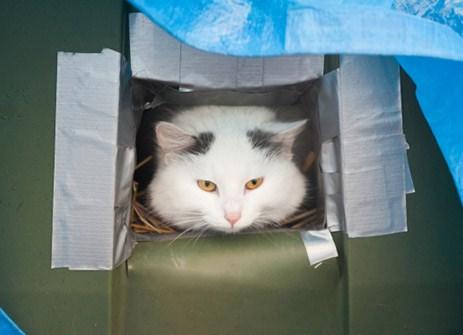 Faire un abri pour chat pour l'hiver