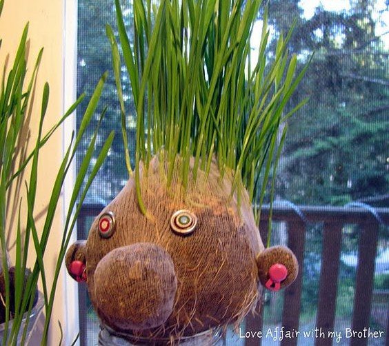 Tutoriels plantations têtes aux cheveux en herbe